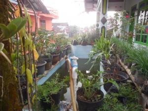 Warga di Dusun Kemranggen, Wulungsari,memanfaatkan lahan di sekeliling rumah dengan menanam sayur mayur dan membuat kolam ikan. Mereka melakukan praktik kemandirian pangan sejak 2012 (Fatah Sururi/ Infest)